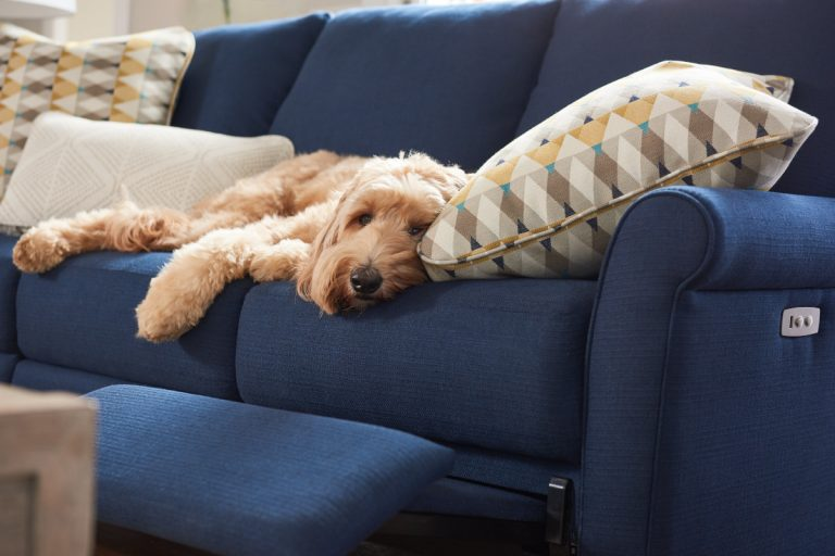 Dog laying on new couch
